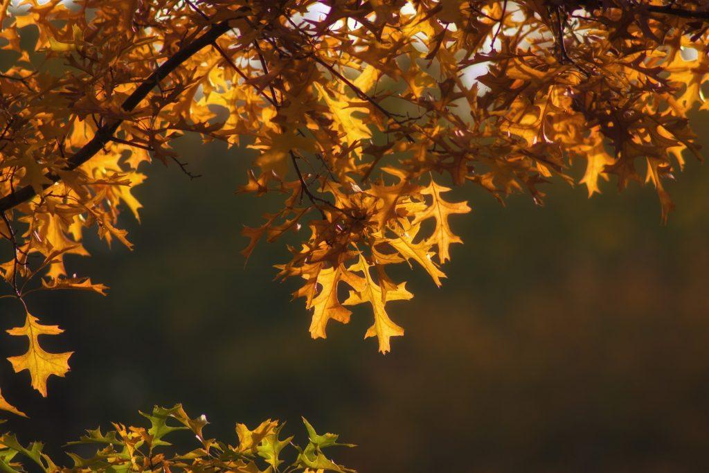 autumn-2895323_1920