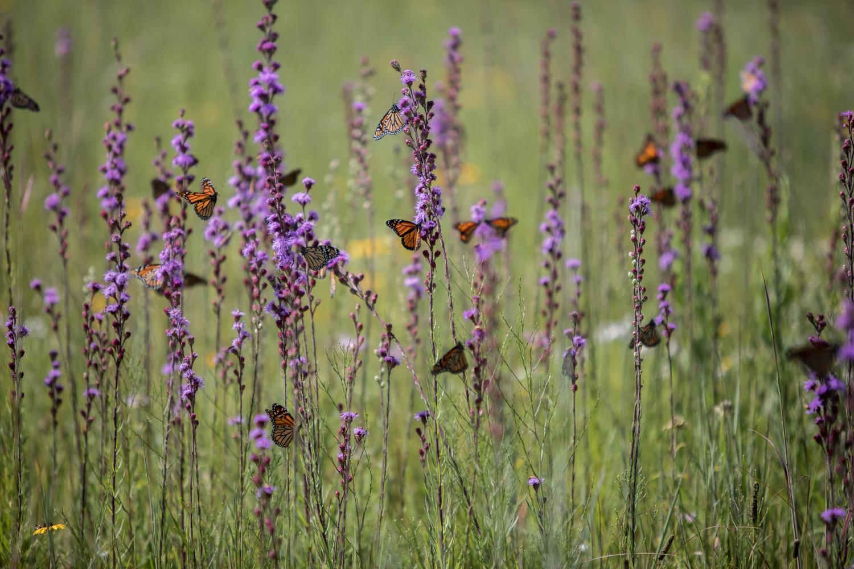 prairie conservation
